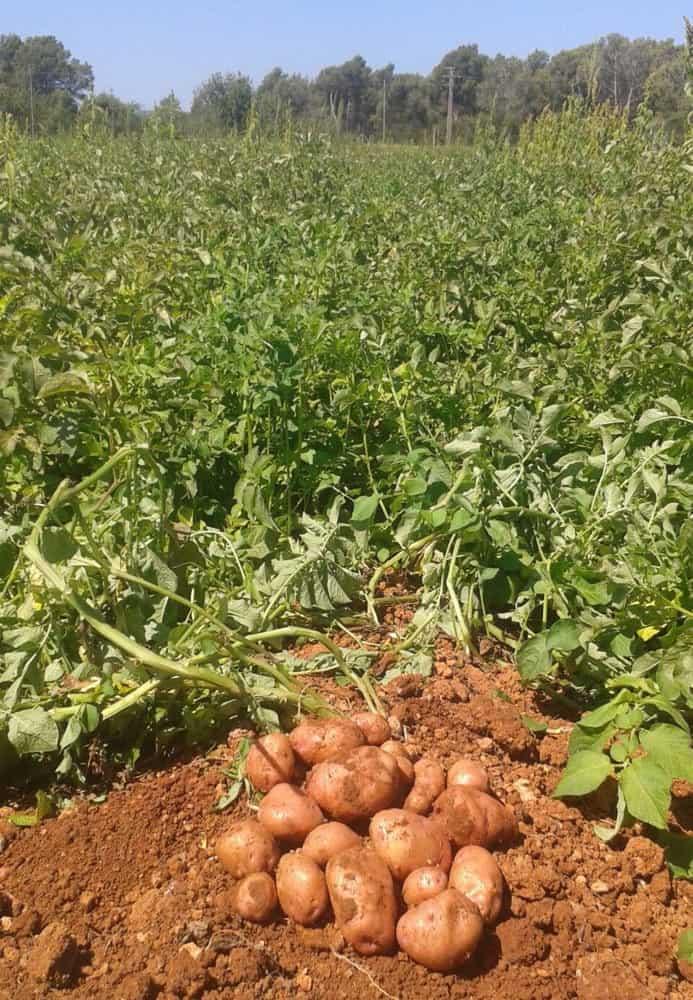 Agroeivissa frutas verduras Ibiza 2020 100