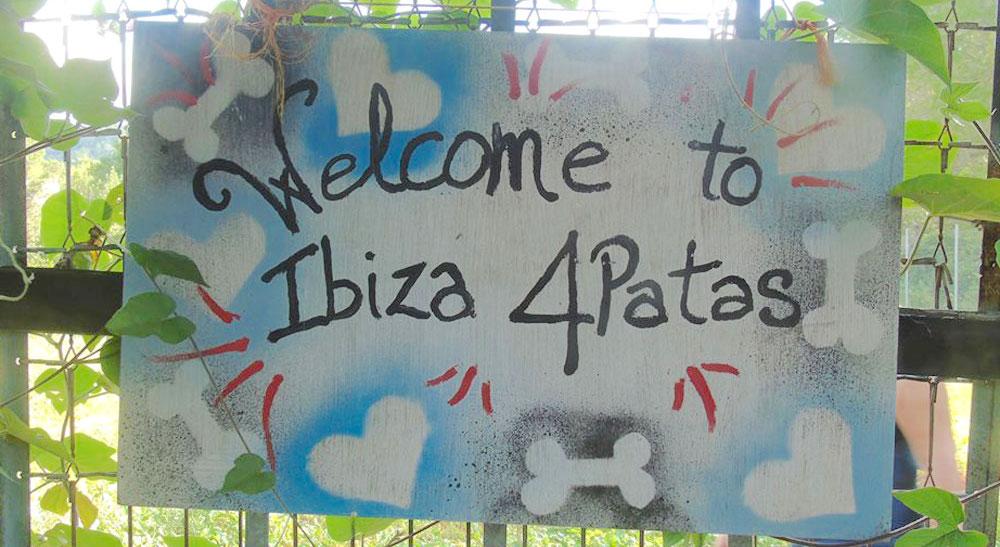 Eivissa 4patas tindrà cura a les mascotes de ingressats per Coronavirus i sense llar