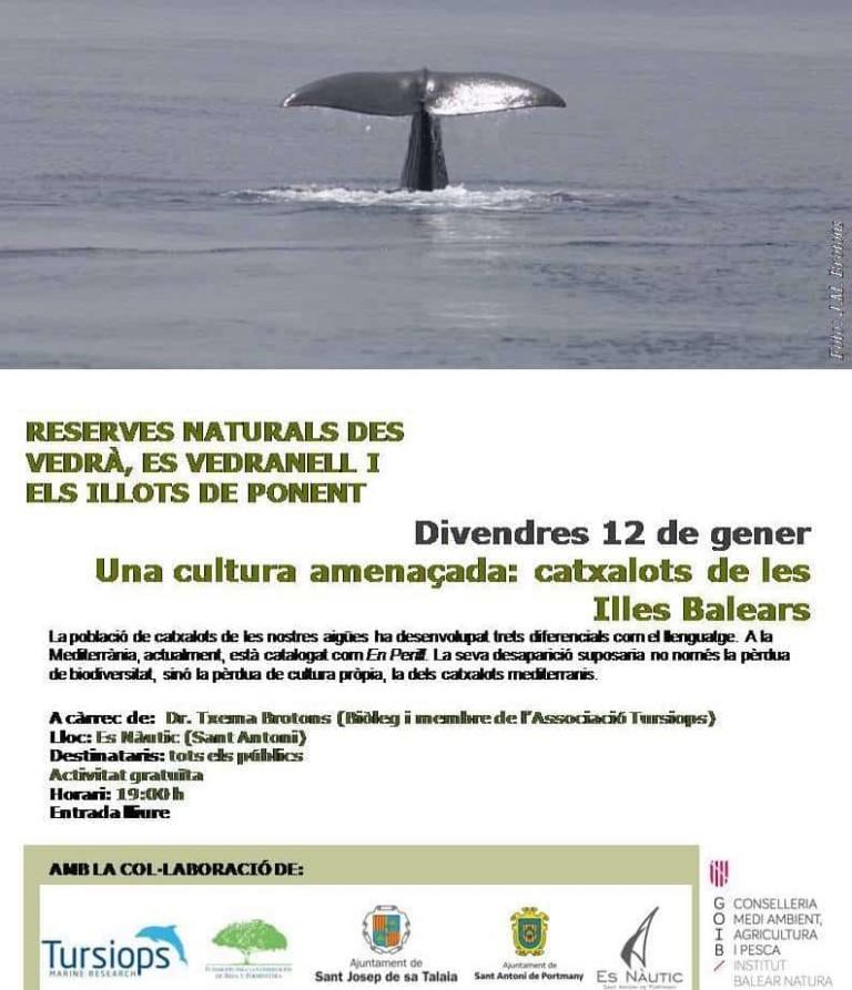 Das Verschwinden des mediterranen Pottwals wird auf Ibiza diskutiert