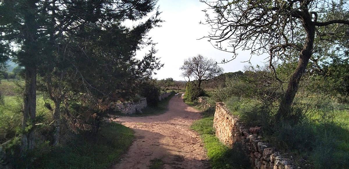camino-tradicional-ibiza-welcometoibiza