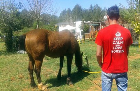 Can Horse Ibiza busca voluntarios