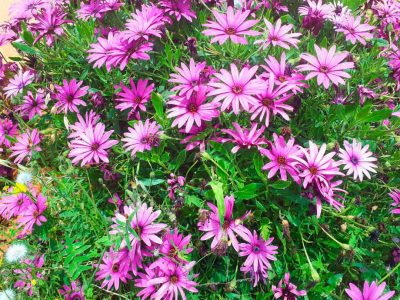 flores-ibiza-welcometoibiza2