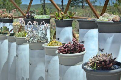 ibiza botanico biotecnologico 2021 09