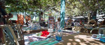 jardí-les-dàlies-Eivissa-welcometoibiza
