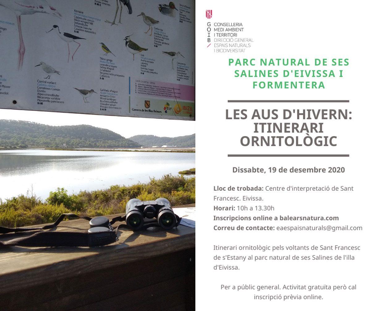 les-aus-en-hivern-itinerari-ornitologico-balears-natura-Eivissa-2020-welcometoibiza