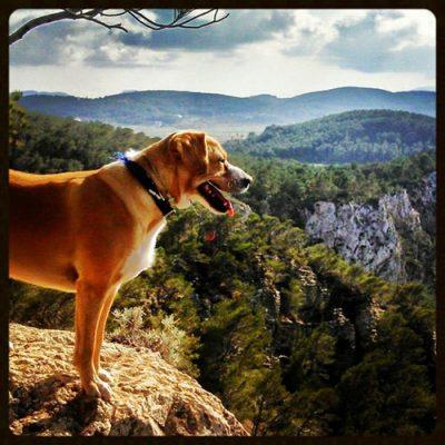Voorjaarsroute door de Santa Inés-vallei met Walking Ibiza