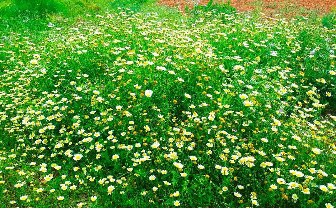 цветы-ибица-welcometoibiza13