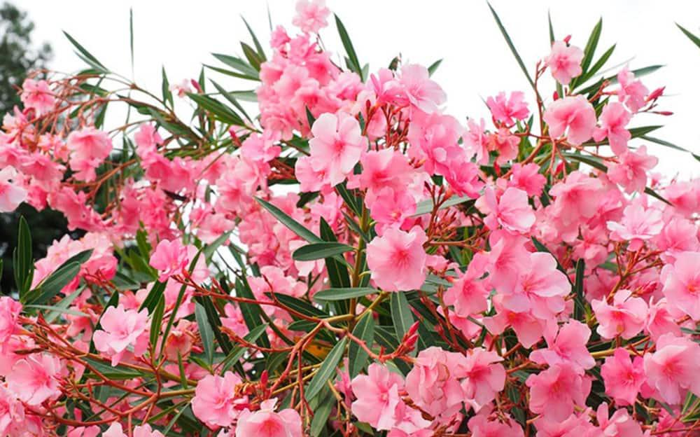 цветы-ибица-welcometoibiza14