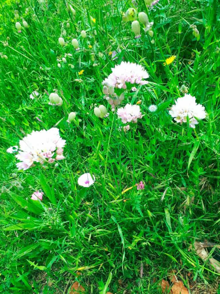 цветы-ибица-welcometoibiza4