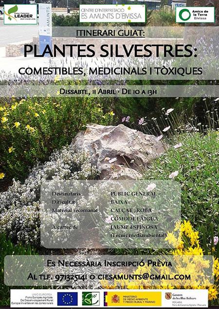Begeleide reisroute om de wilde planten van Ibiza te leren kennen