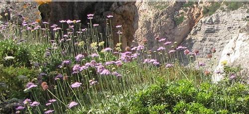 Ruta para descubrir la flora de Es Amunts de Ibiza este sábado