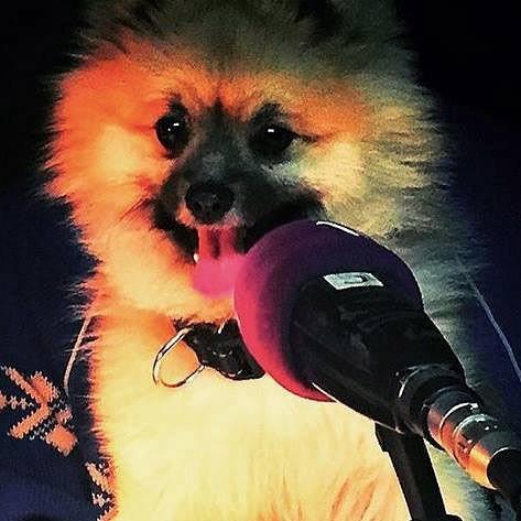 Verlor den Sankeys-Hund auf Ibiza