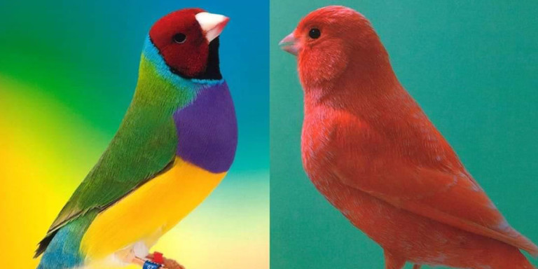 xxviii-muestra-ornitologica-ciudad-de-ibiza-2020-welcometoibiza